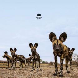 Balthazar - Fever LP